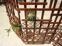 biombo treliça - ripas e plantas
